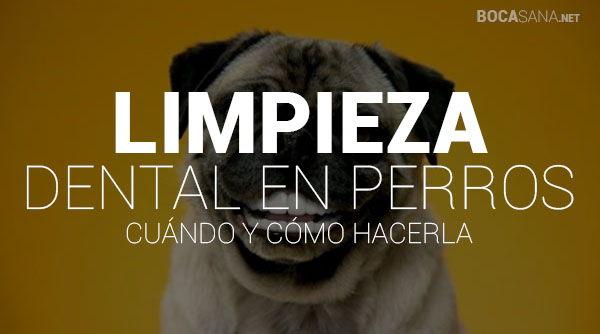 limpieza dental en perros