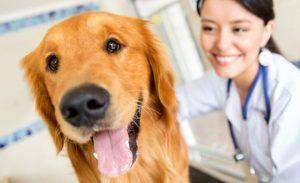 mantener la limpieza dental de mi perro